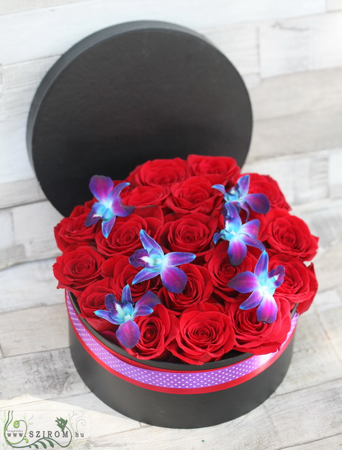 red rose box with blue dendrobium orchids (25 roses) - virágküldés
