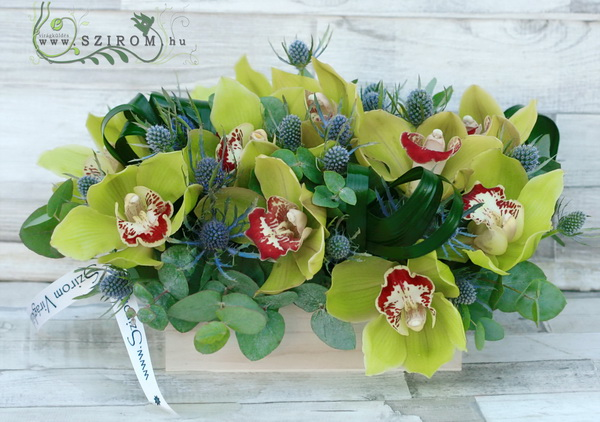 10 green orchids in natural wooden box with eryngium - virágküldés
