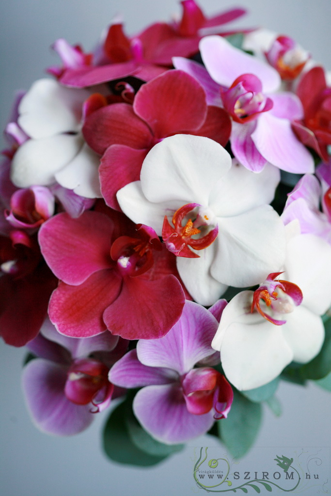 bridal bouquet (phalaenopsis, white, pink)